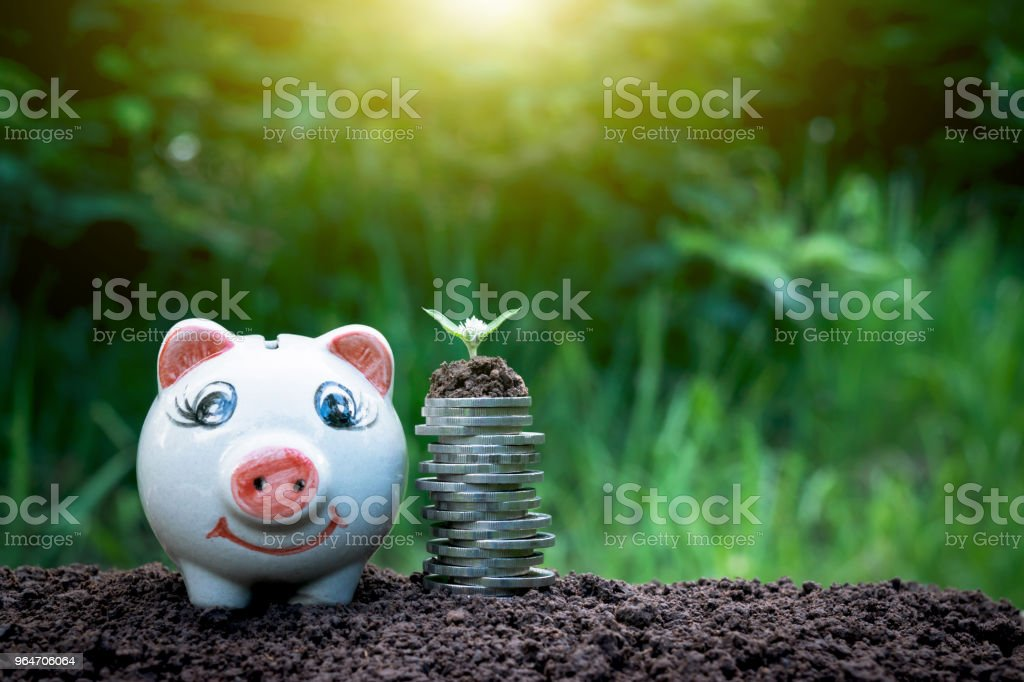 Tree on the coins have a piggy bank and coins next to on the ground and complete in nature background. royalty-free stock photo