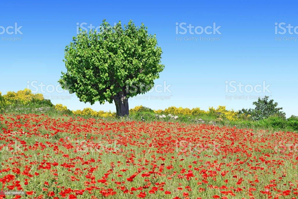Tree on the edge of a meadow. - fotografia de stock