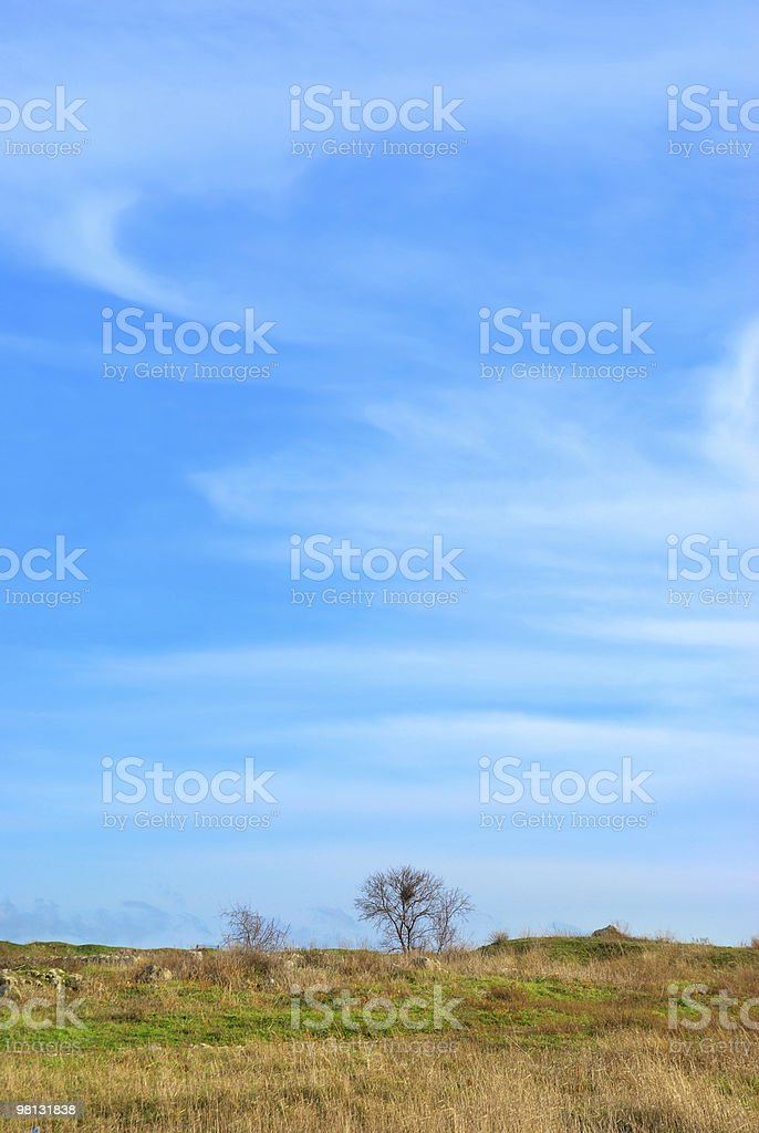 Tree on the field royalty-free stock photo