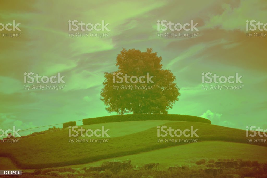 Tree on the hill stock photo