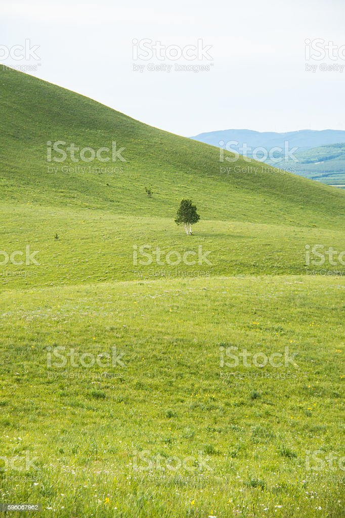 Tree on the hilly meadow royalty-free stock photo
