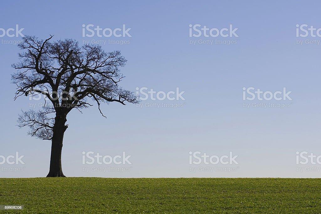 Tree On The Horizon Against A Blue Sky stock photo