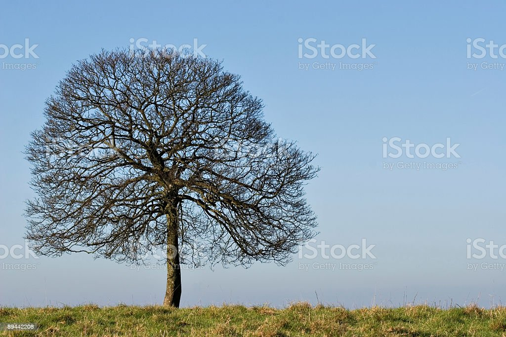 Tree On The Horizon royalty-free stock photo