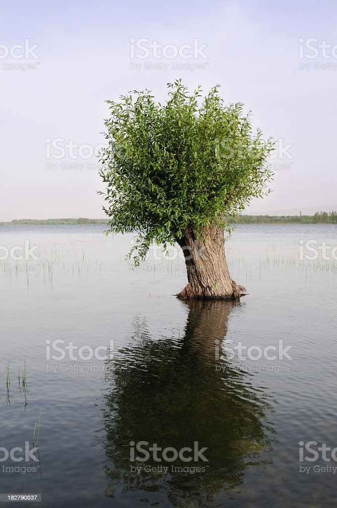 Tree on the lake stock photo