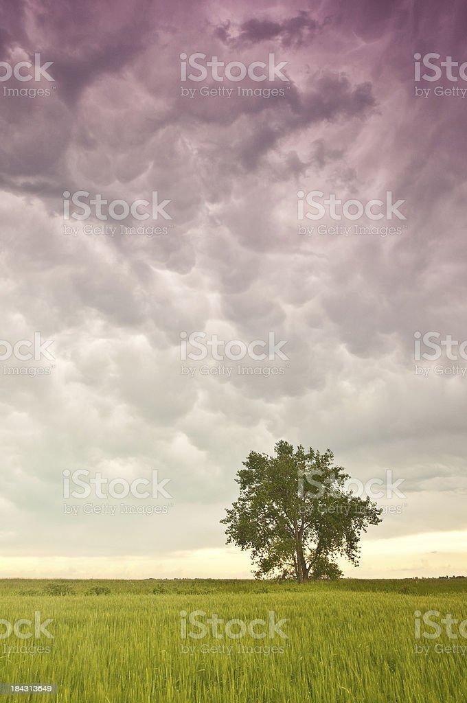 Tree on the Plains royalty-free stock photo