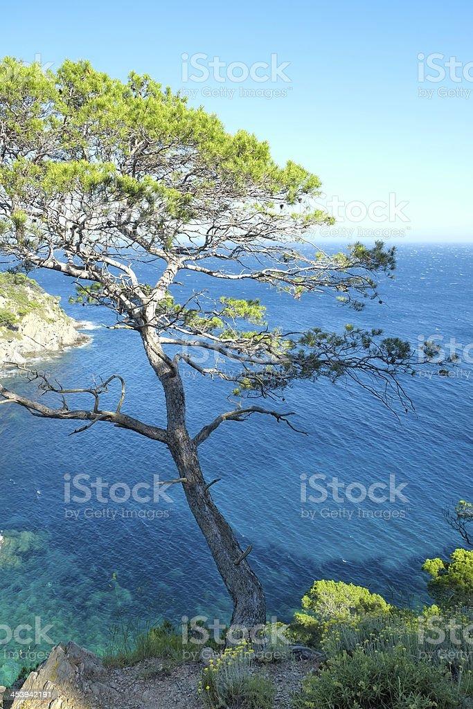 Tree on the seacliff stock photo