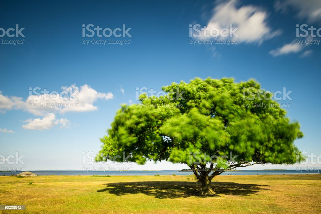 Tree on the summer meadow by water (XXXLarge) stock photo