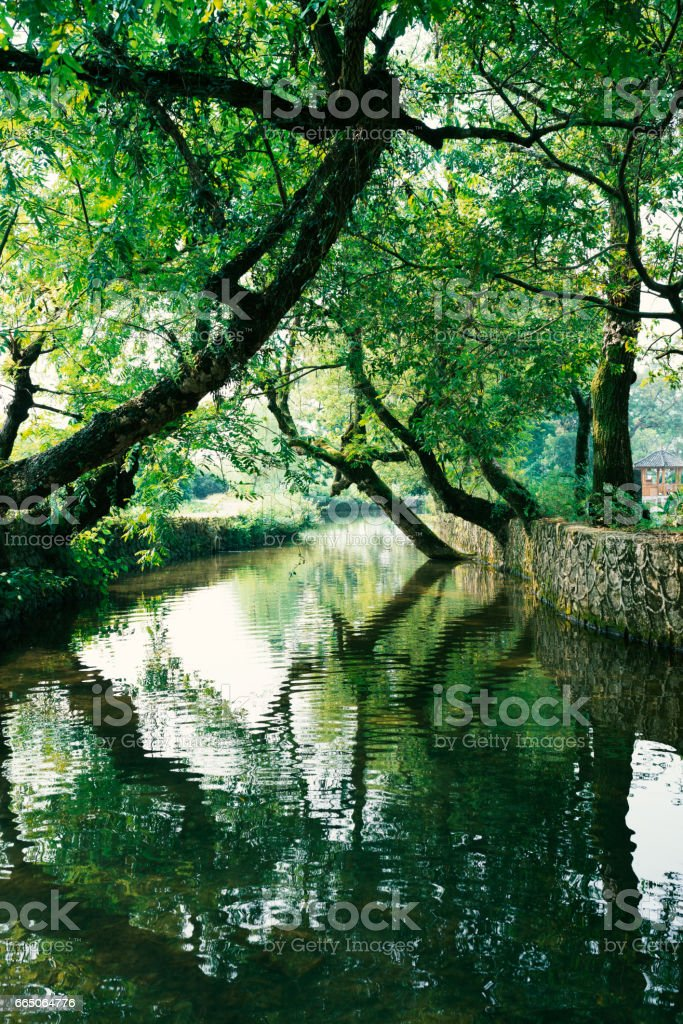 tree on the water stock photo