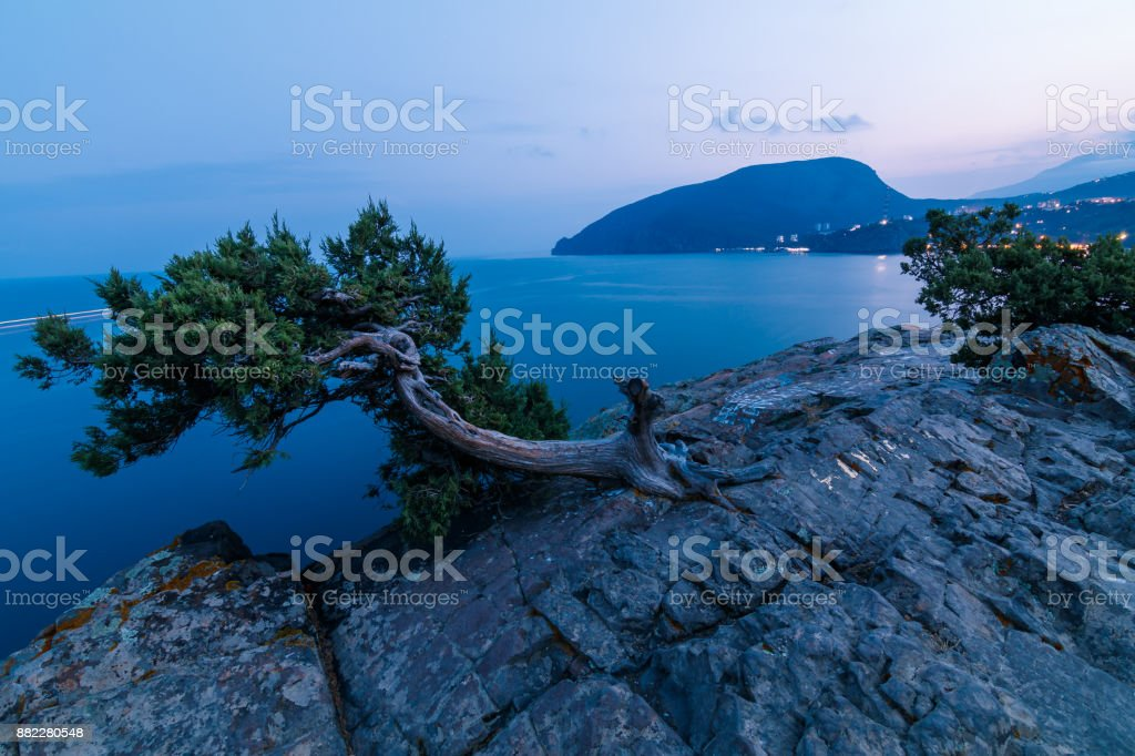 tree on top of a cliff stock photo