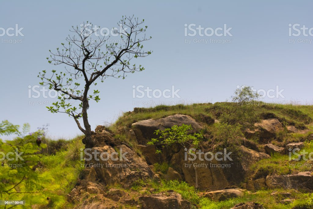 Árvore no topo - Foto de stock de Azul royalty-free