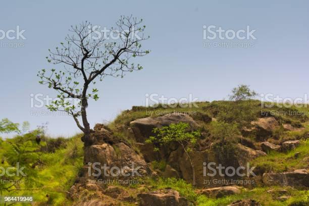 Foto de Árvore No Topo e mais fotos de stock de Azul