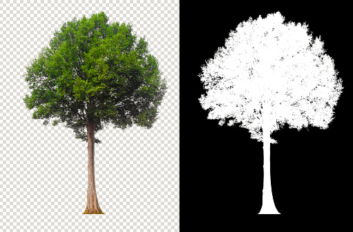 tree on transparent background with clipping and alpha channel for brush