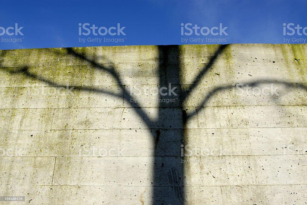 Tree on wall royalty-free stock photo