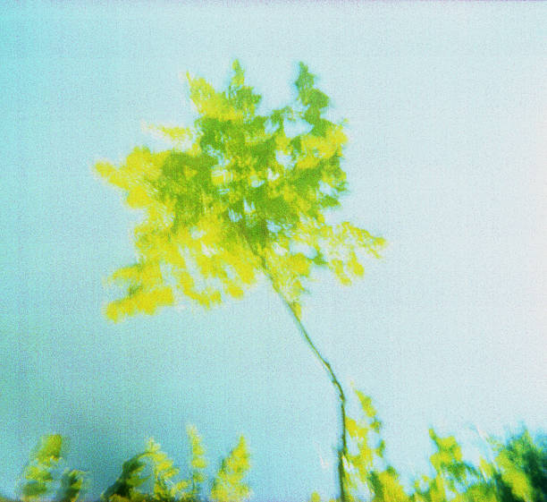 Tree- Out Of Focus Against Pale Blue Sky stock photo