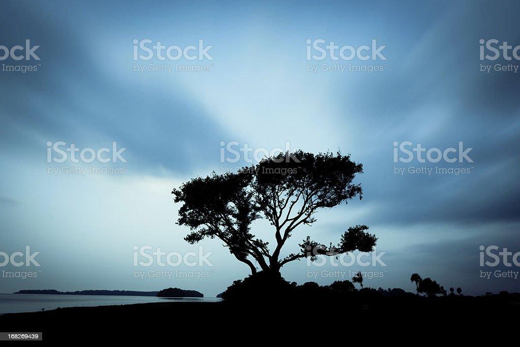 Tree over blue sky royalty-free stock photo