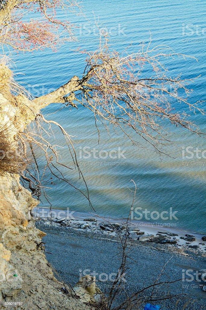 tree over break of the sea stock photo