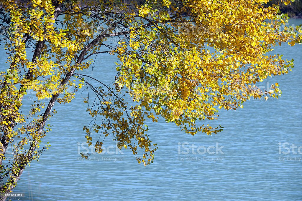 Tree Over Calm Waters royalty-free stock photo