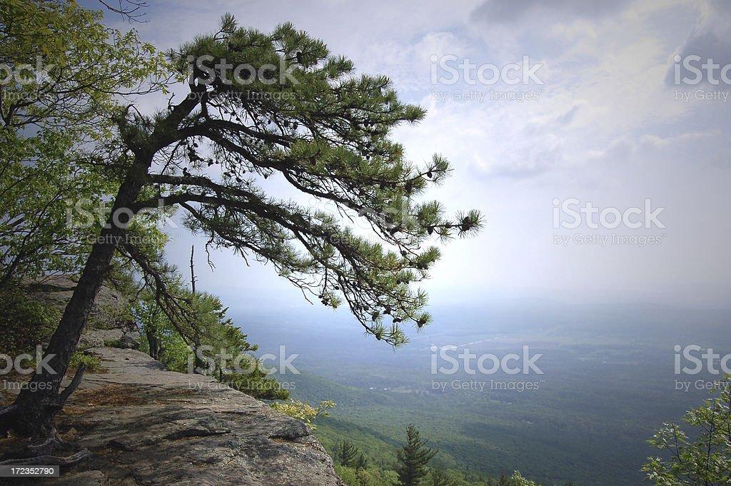 Árbol de acantilado foto de stock libre de derechos