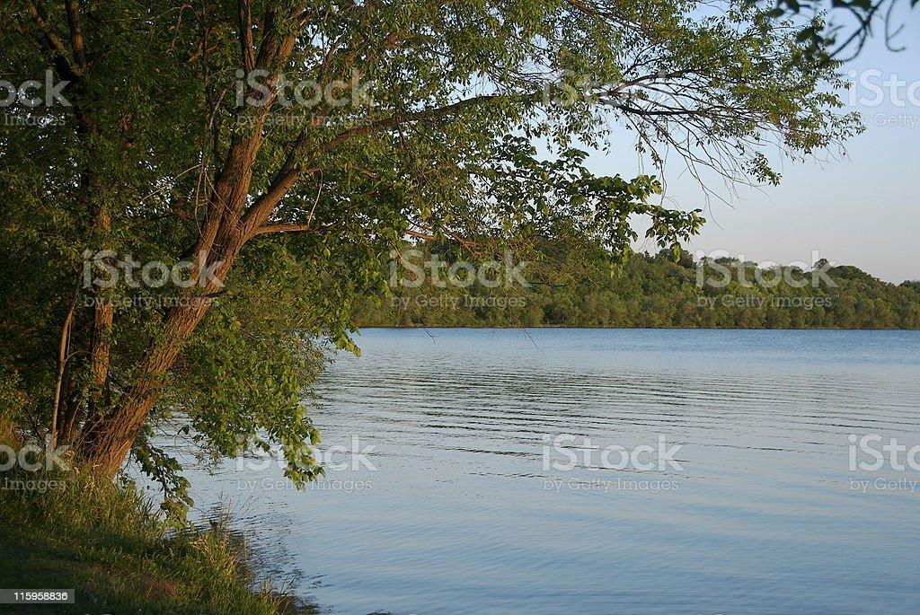 Tree over lake stock photo