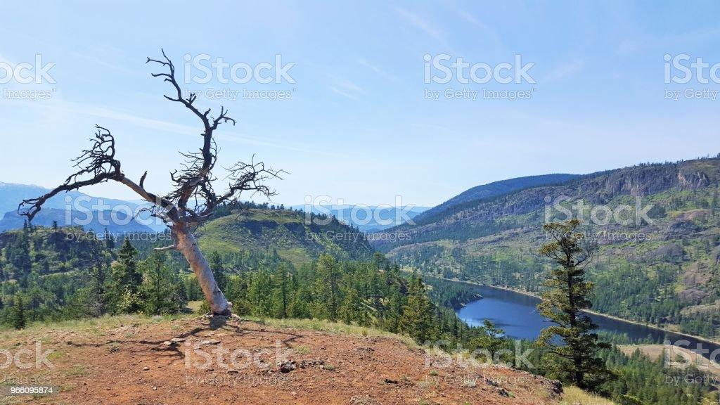 träd över sjön - Royaltyfri Berg Bildbanksbilder