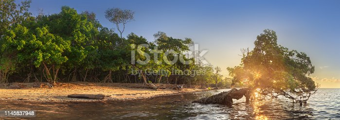 istock Tree over the water and coast of Borneo beach 1145837948