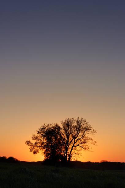 Tree pair during sunset (worn version) stock photo