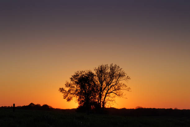 Tree pair during sunset (landscape version) stock photo