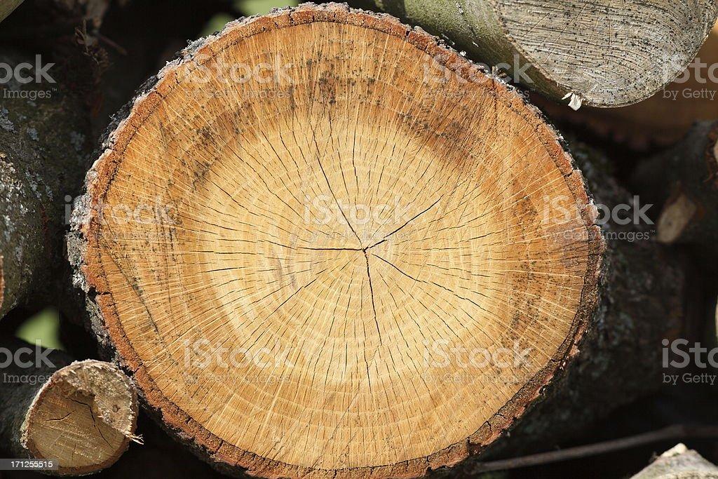 Baum Ringe Fenster mit jährlichen – Foto