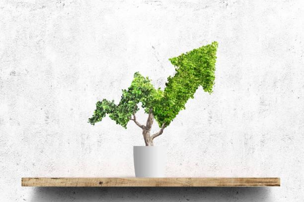 트리 - 재배 식물 뉴스 사진 이미지