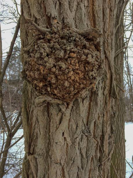 IMG_1388 Tree stock photo