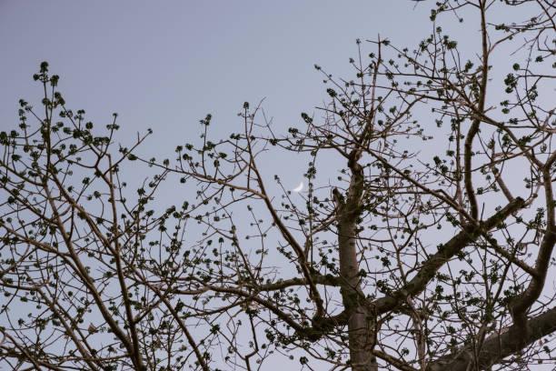 Árbol - foto de stock
