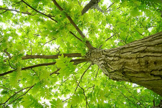 tree - was ist co2 stock-fotos und bilder