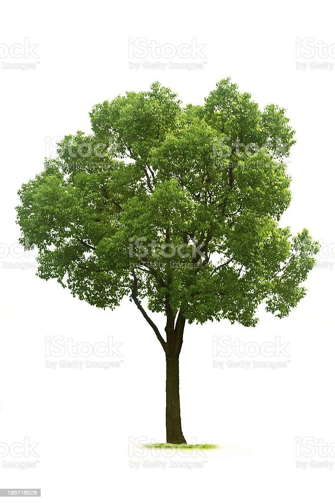 Tree - Royalty-free Ağaç Stok görsel