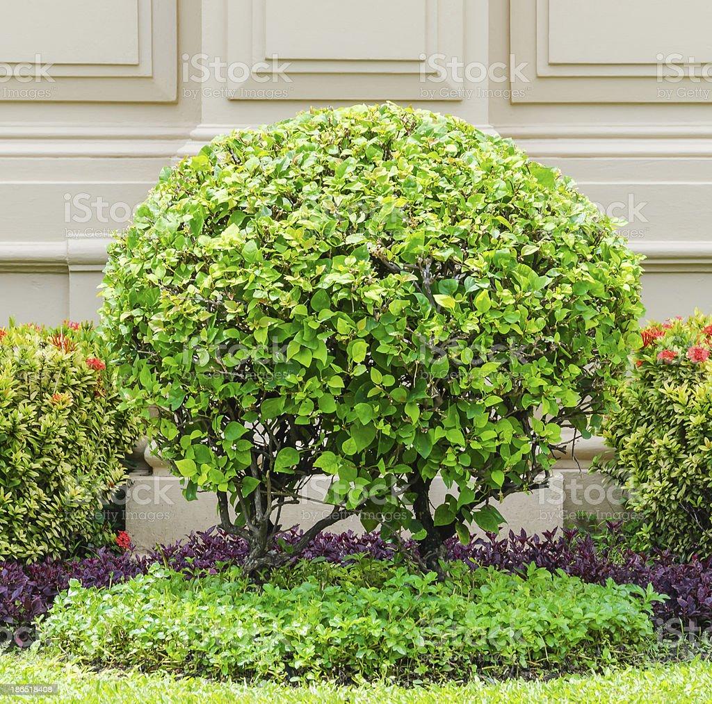 Tree royalty-free stock photo