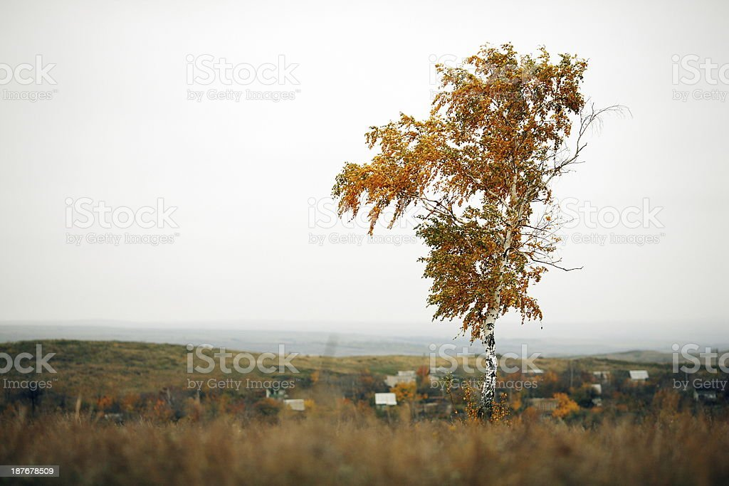 Tree royalty-free stock photo