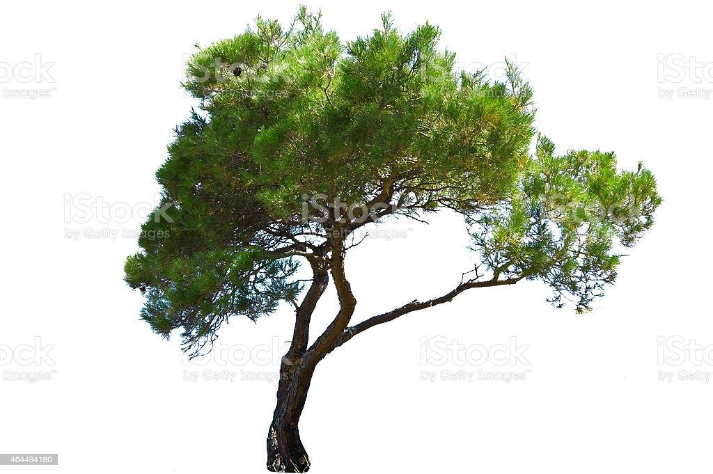 Árvore - foto de acervo