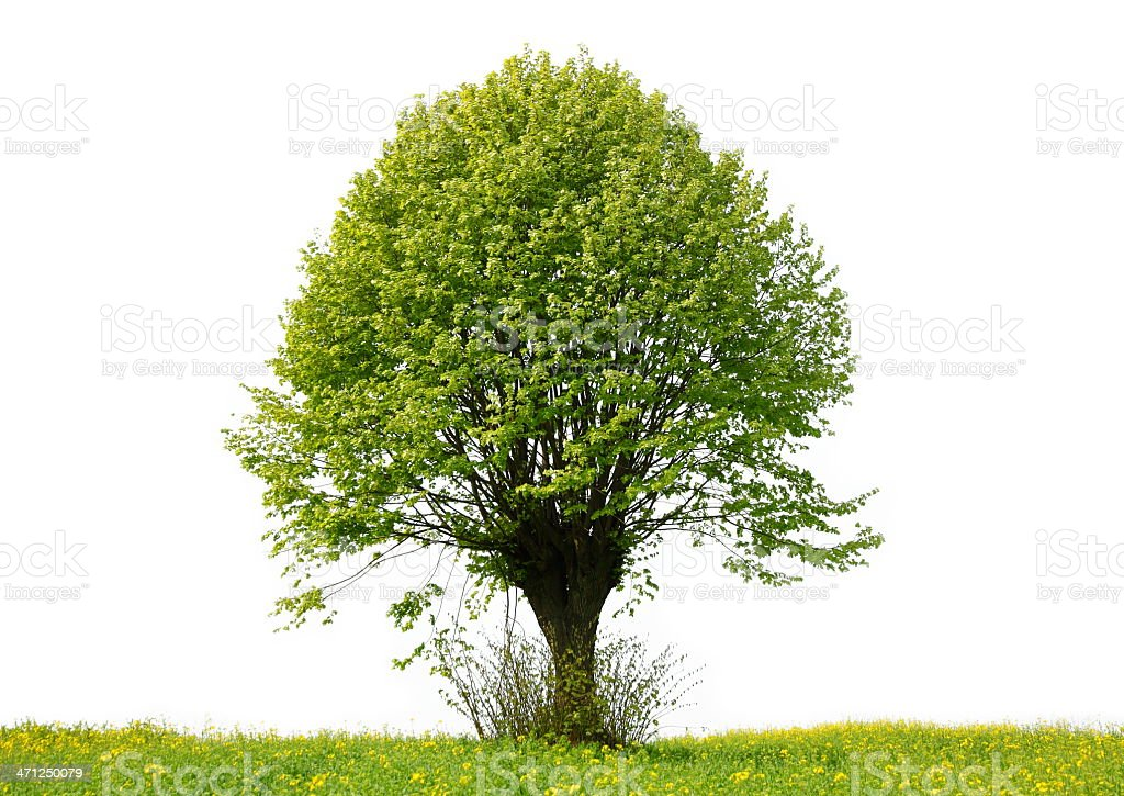 Árvore - fotografia de stock