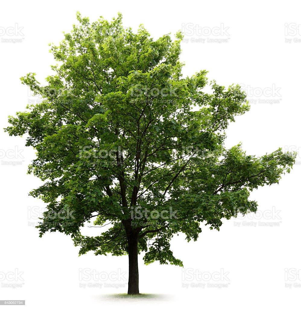 Tree – Foto