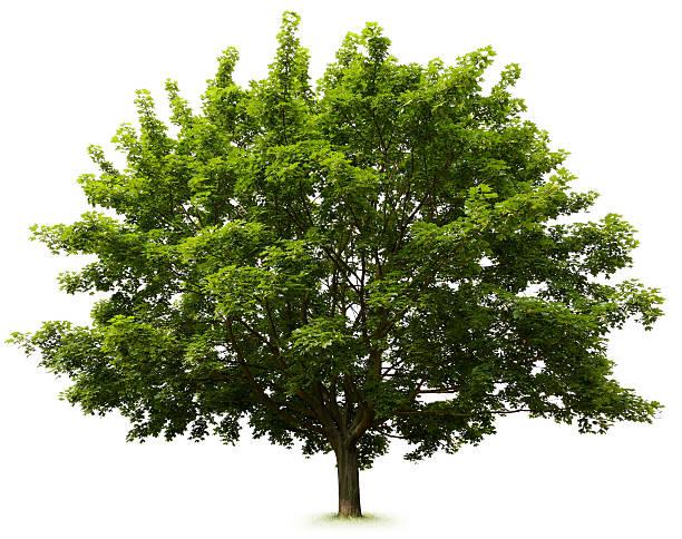 のツリー ストックフォト