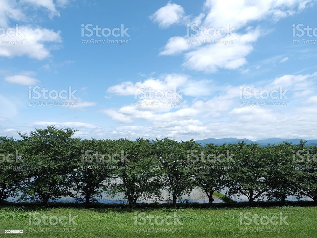 Árvore  foto royalty-free