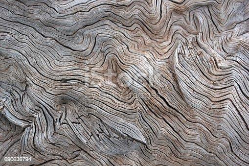 istock Tree 690636794