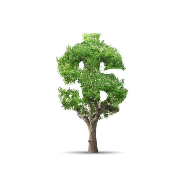 tree - dollar sign stock photos and pictures
