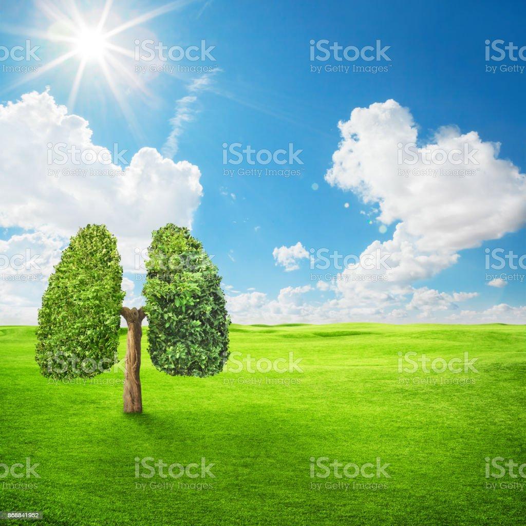 tree - foto stock