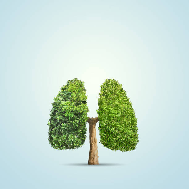 tree Green tree shaped in human lungs. Conceptual image lung stock pictures, royalty-free photos & images