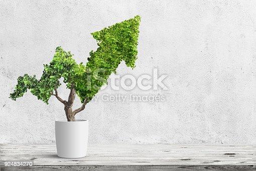 istock tree 924834270