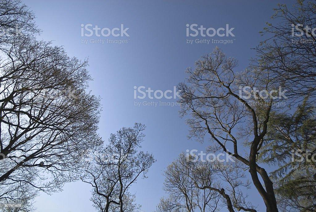 Tree Lizenzfreies stock-foto
