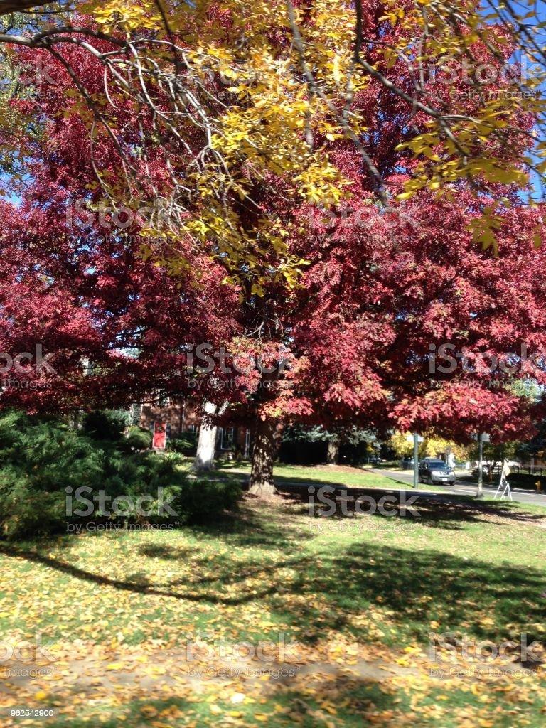 árvore - Foto de stock de Amarelo royalty-free
