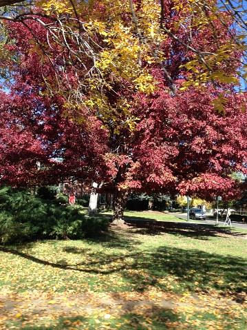 Foto de Árvore e mais fotos de stock de Amarelo