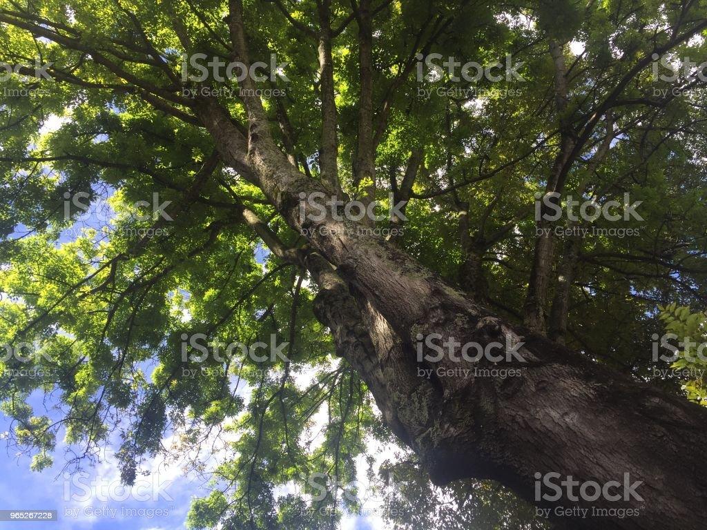 Tree zbiór zdjęć royalty-free