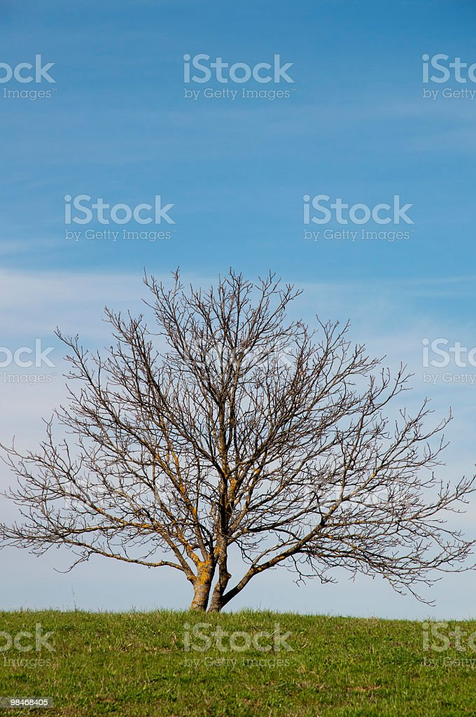 Albero foto stock royalty-free